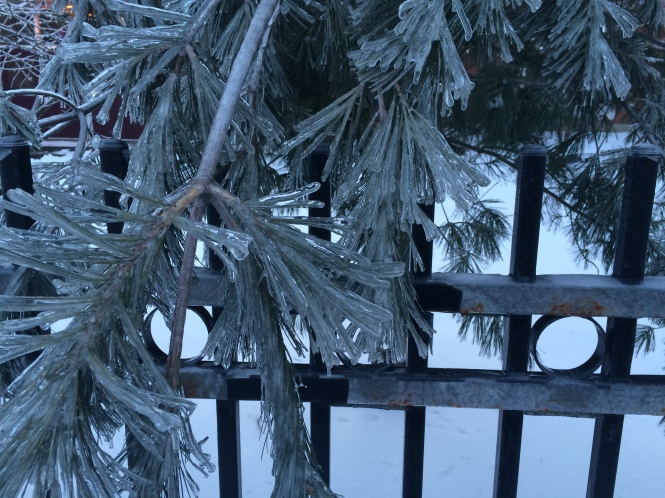 Ice on Pines, Copyright Silverleaf, 2015
